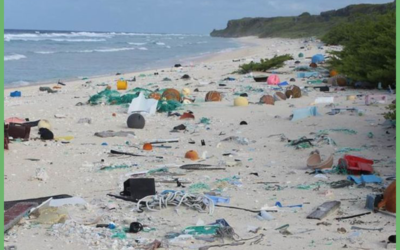 Reducing plastic waste: Bye-bye single-use plastics